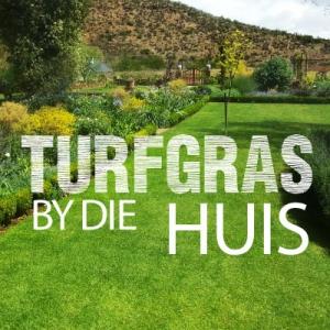 Turfgras by die huis