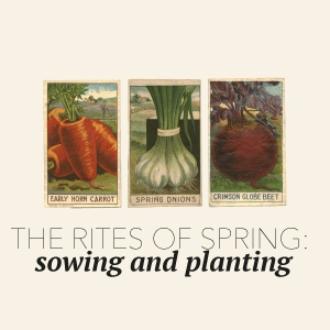 The rites of Spring – Sowing and planting